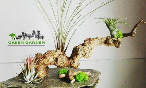"<h2><a href=""https://www.tuincentru.ro/o-afacere-pe-care-trebuie-sa-o-cunosti-green-garden-cum-te-diferentiezi-inteligent-intr-o-piata/"">O afacere pe care trebuie sa o cunosti: Green Garden – cum te diferentiezi inteligent intr-o piata<a href='https://www.tuincentru.ro/o-afacere-pe-care-trebuie-sa-o-cunosti-green-garden-cum-te-diferentiezi-inteligent-intr-o-piata/#comments' class='comments-small'>(0)</a></a></h2>Mi-a placut mult povestea Andreei Tarhon si vreau sa o cunoasteti si voi. Andreea a parcurs drumul obisnuit al oricarui tanar: a invatat, a mers la facultate, s-a angajat, a"