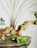 O afacere pe care trebuie sa o cunosti: Green Garden – cum te diferentiezi inteligent intr-o piata
