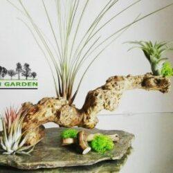 O afacere pe care trebuie sa o cunosti: Green Garden - cum te diferentiezi inteligent intr-o piata