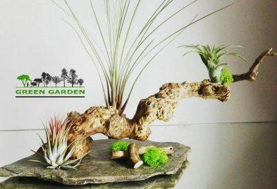 green garden aranjamente plante suculente aeriene licheni muschi 1 tuincentru.ro